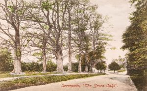 Illustrated colour postcard of the Seven Oaks, published by Salmon, © Kent County Council Sevenoaks Museum